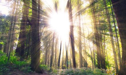 L'arbre de la forêt